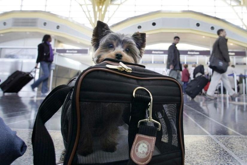 Todo lo que necesitas saber para viajar en avión con tu perro enMéxico